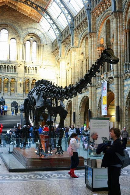 London - Natural History Museum Dippy