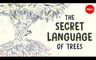 The secret language of trees - Camille Defrenne and Suzanne Simard