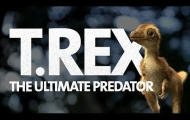 What Did a Baby T. rex Look Like?