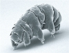 Lost in space: tardigradi sulla Luna